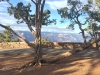 Grand Canyon – sideways tree