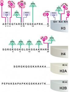 Epigenetics Figure 5