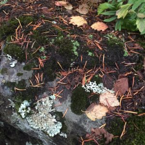 Whidbey Island – flora at Deception Pass