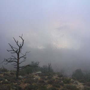Grand Canyon in heavy morning fog, which turned out way prettier than I thought it would