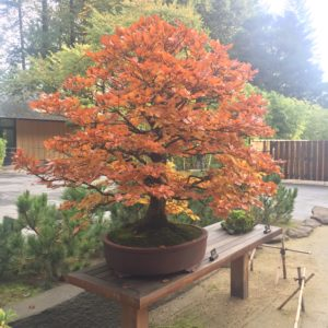 Portland Japanese Garden – bonsai exhibit