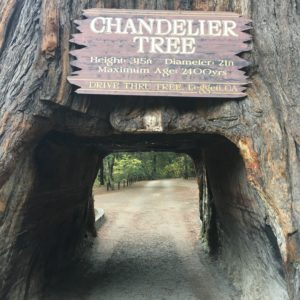 Chandelier Tree CA