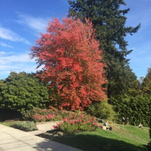 Portland Rose Garden – big ol' red tree